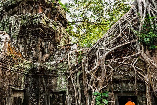 Cambodge_Ta-Prohm