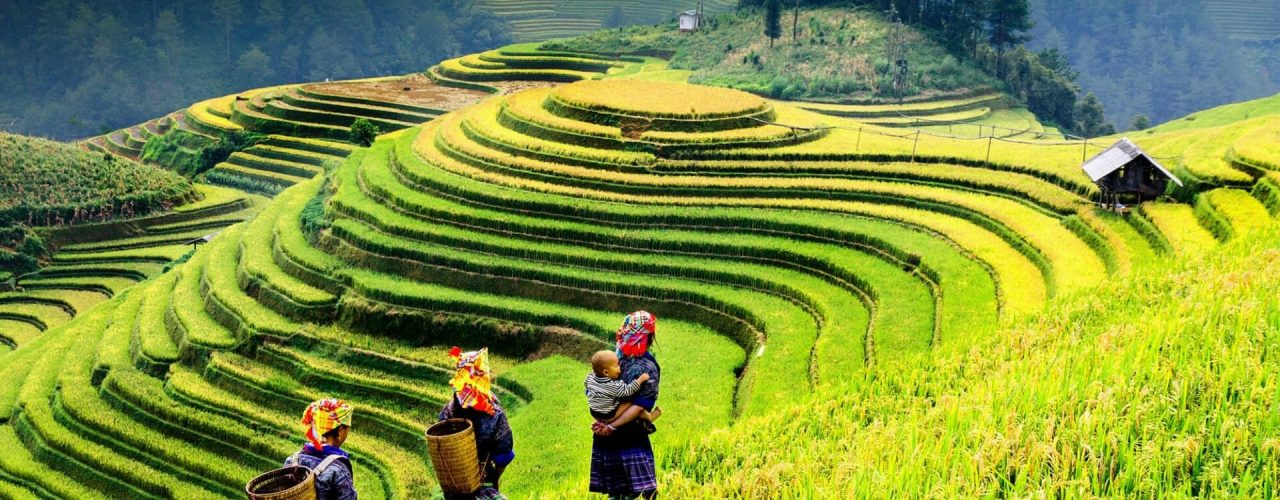 Vietnam Mu Cang Chai, rizières en terrasses
