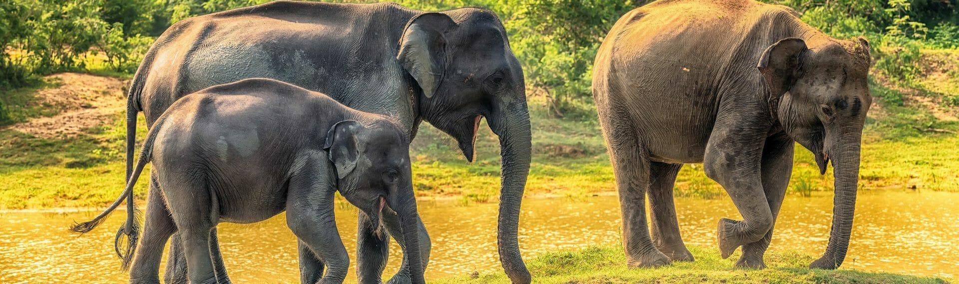 Sri Lanka: Yala National Park