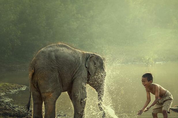 Enfants_elephant_800x800