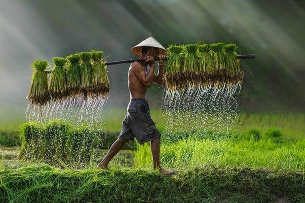 Vietnam_riziere_800px