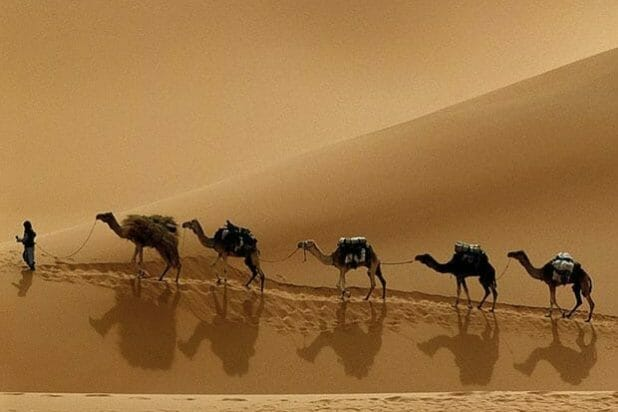 Desert-Safari-Chameaux