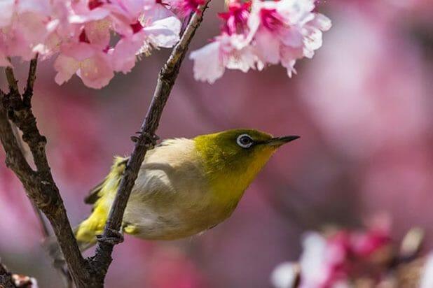 Printemps_oiseau